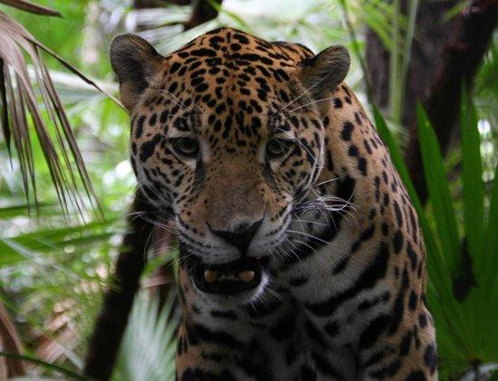 Belize Cave Tubing & Zoo Adventure